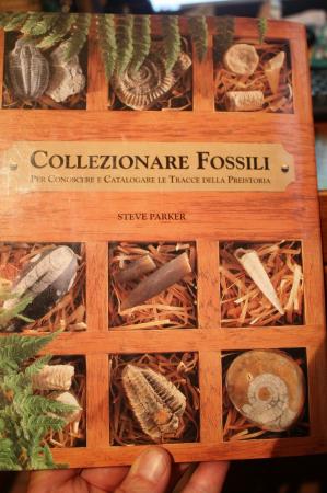 Collezionare fossili